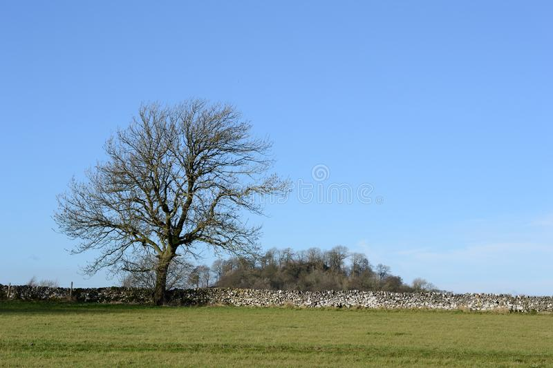 Tree and sky. No leaves tree and the blue sky backgroud stock image