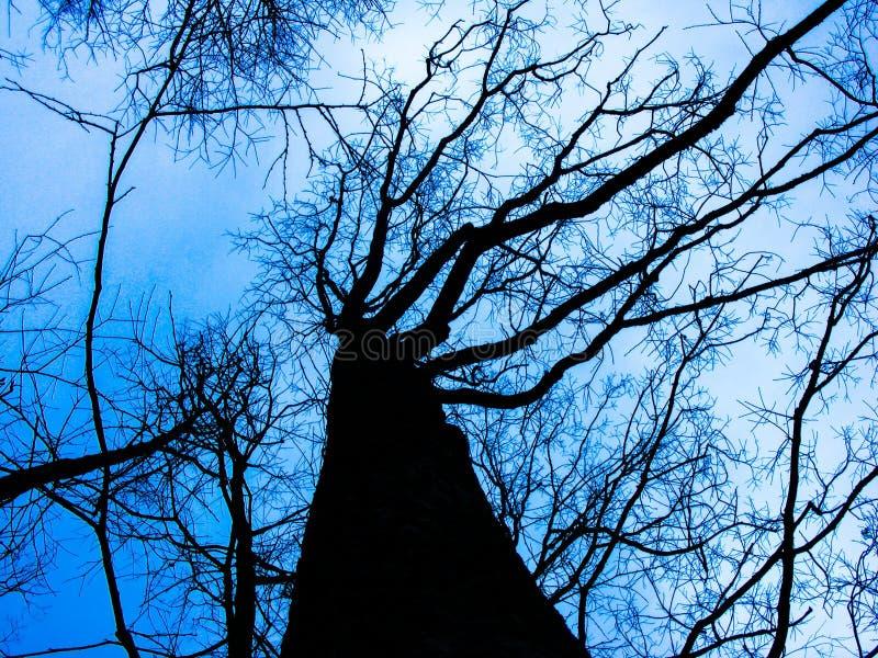 Tree, Sky, Branch, Blue royalty free stock photo
