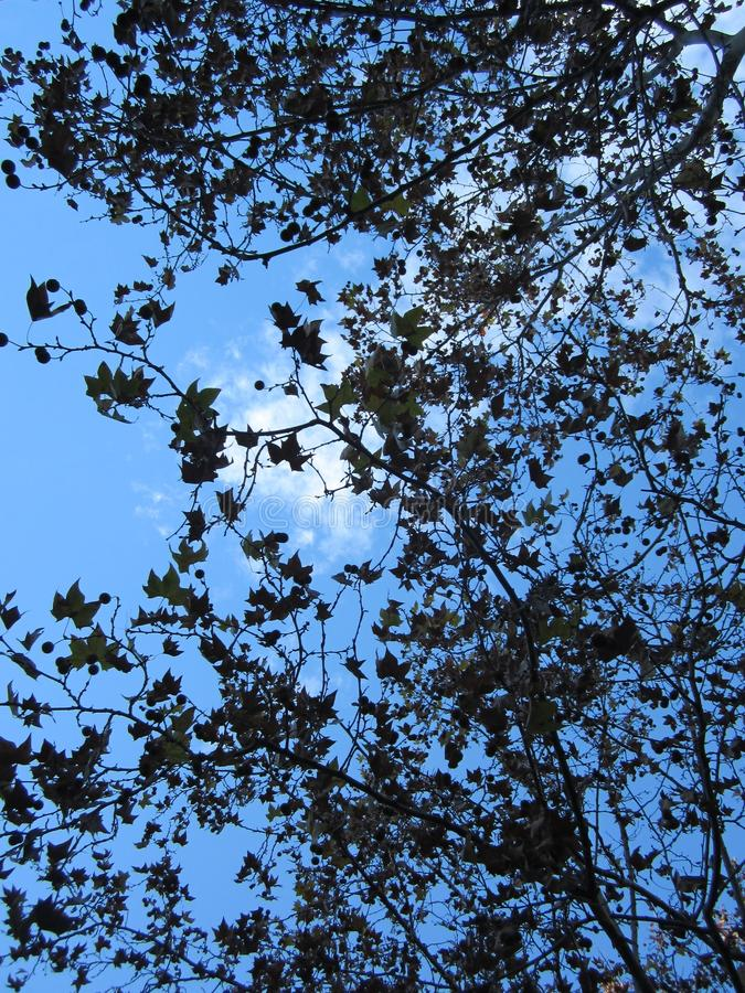 Tree Sky Cloud. Leaf Spring Natural Summer royalty free stock images