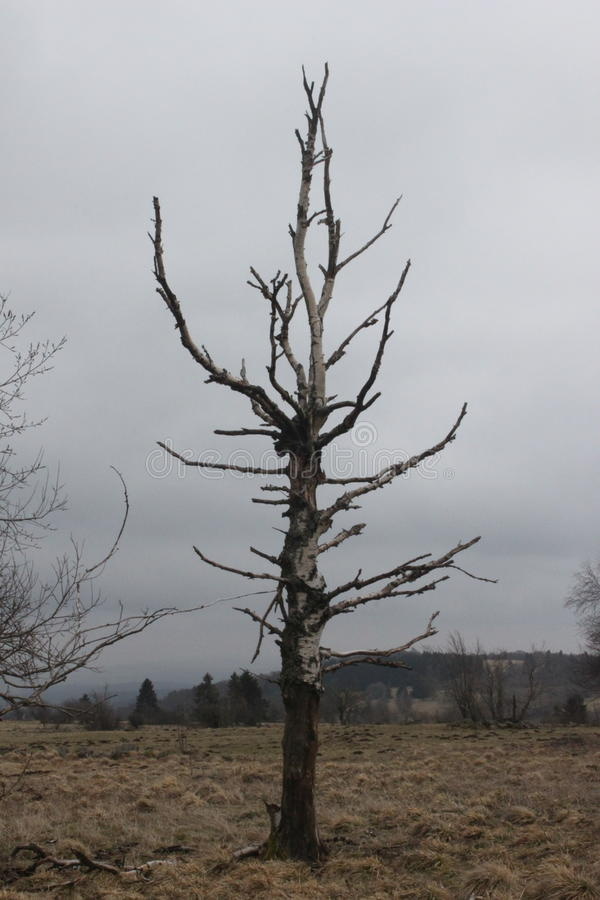 Tree and sky. A dead tree and the cloudy sky in the Rhön, Hesse, Germany stock photography
