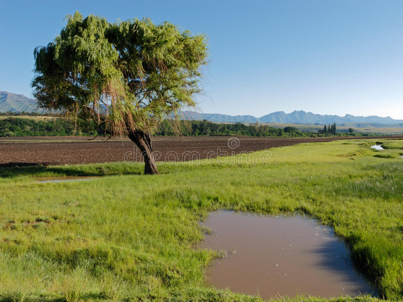 Download Tree, Sky And Green Pasture Stock Image - Image: 13002351