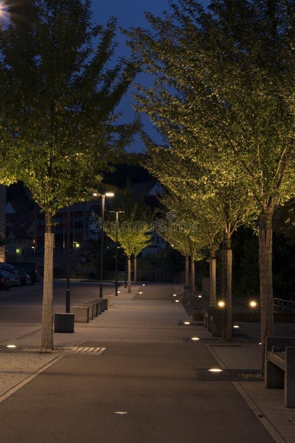 Tree, Sky, Night, Street Light royalty free stock photography