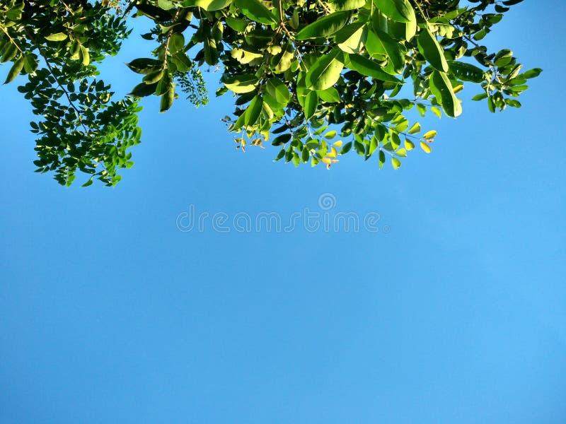 tree in Sky stock image