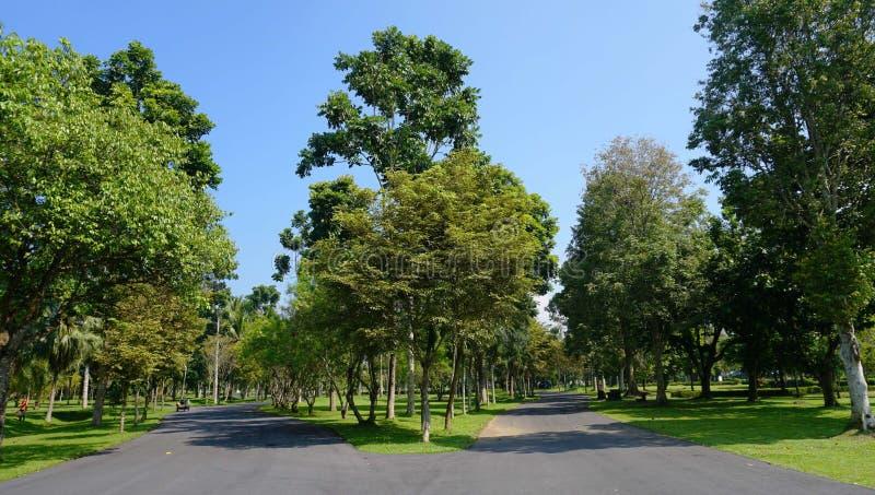 Tree, Sky, Park, Grove stock image
