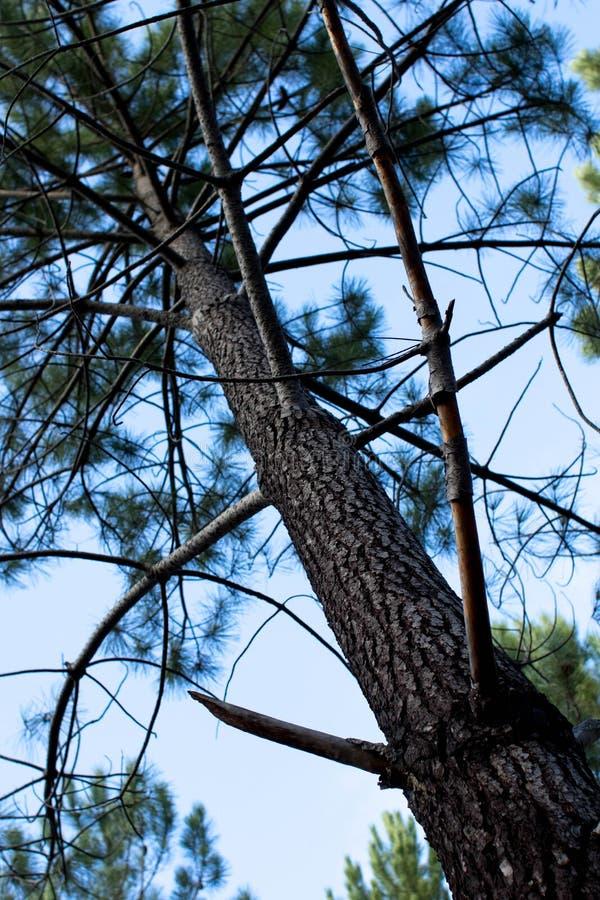 Tree and sky stock image