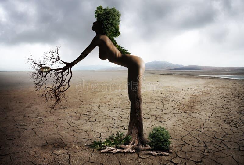 Tree, Sky, Plant, Vacation royalty free stock photography