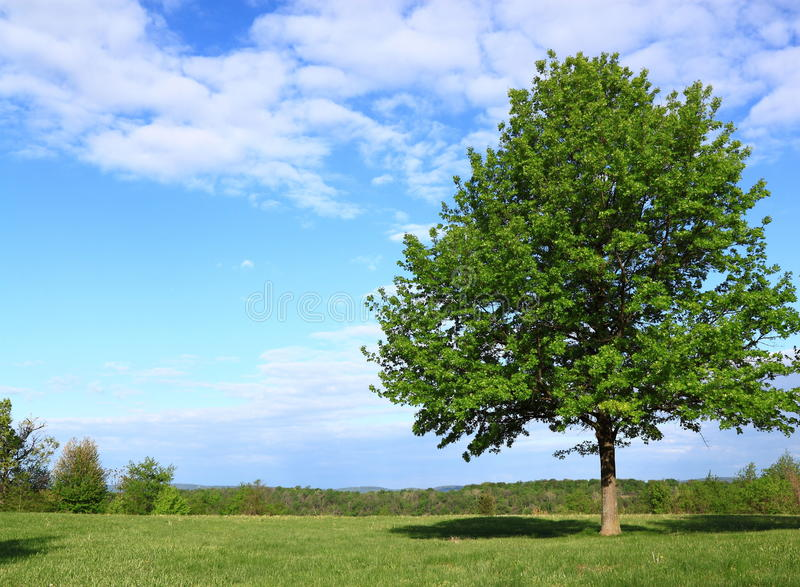 Tree and Sky Scenic View royalty free stock photo
