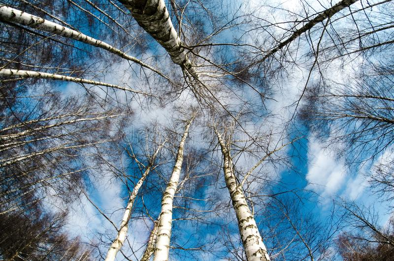 Tree, Sky, Woody Plant, Branch royalty free stock photography