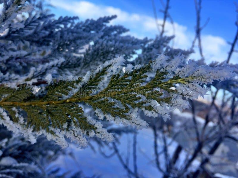 Tree snow nature royalty free stock image