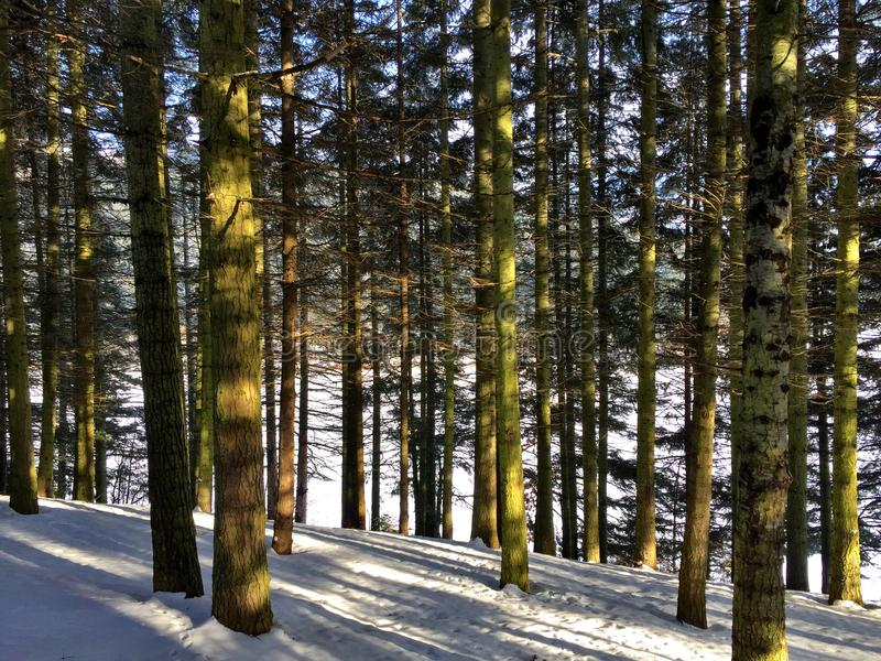 Tree snow nature stock images