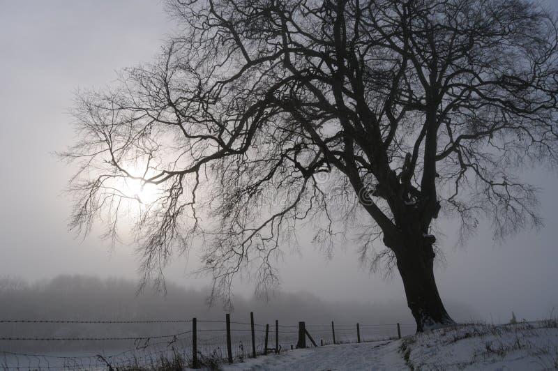 Tree On Snowy Day Stock Photo