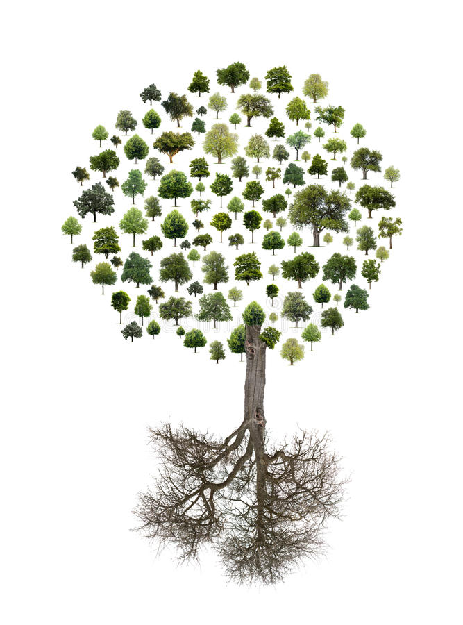 Tree som göras från trees royaltyfria bilder