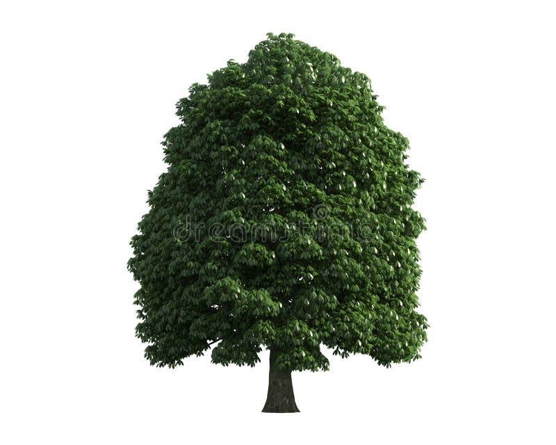 Tree som isoleras på en vit bakgrund arkivbild
