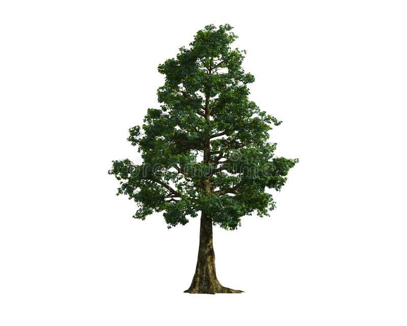 Tree som isoleras på en vit bakgrund stock illustrationer