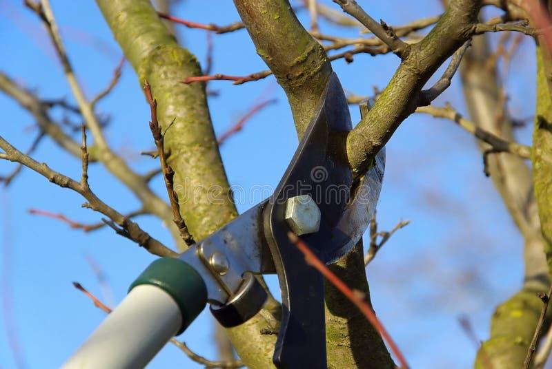 Tree som klipper 06 fotografering för bildbyråer