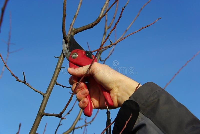 Tree som klipper 21 royaltyfri bild