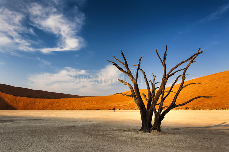 Tree in Sossusvlei, Namibia royalty free stock photography