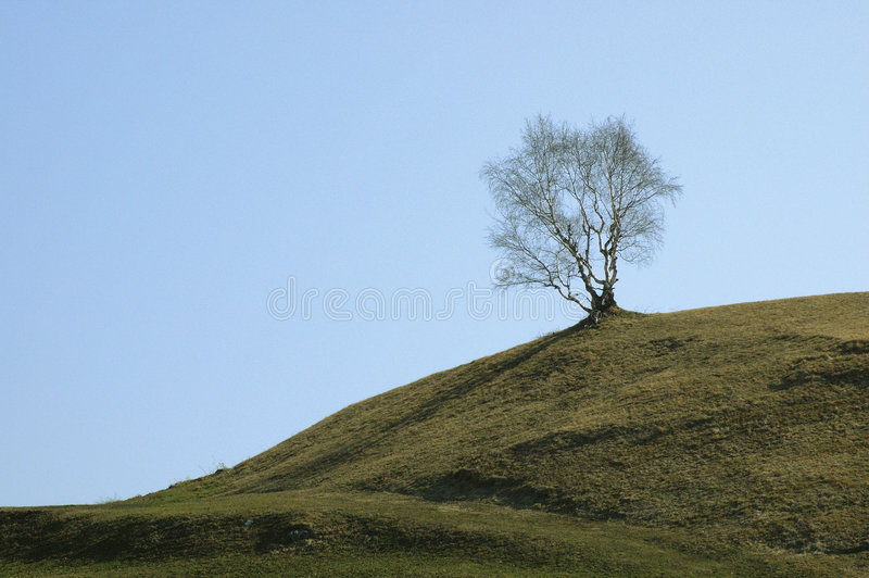Tree in spring 2 royalty free stock photo