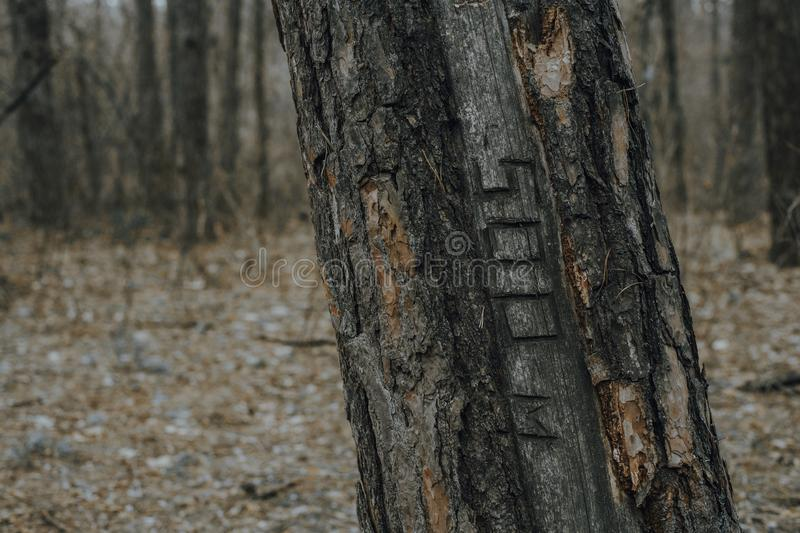 Tree in the spring forest with the inscription 500. Texture. Blur royalty free stock image