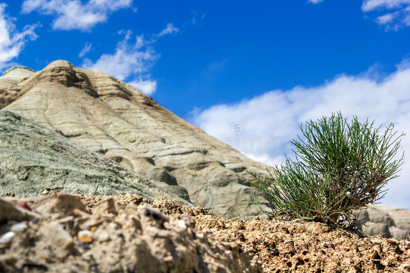 Tree sprout in the desert against the white mountains. cloudy sky royalty free stock photo