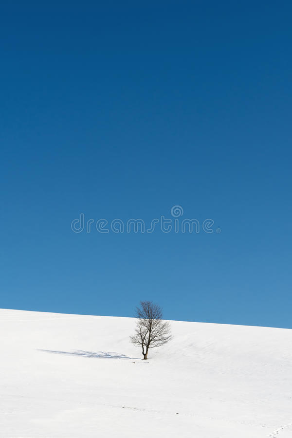 Tree standing amid snowy plains stock photo