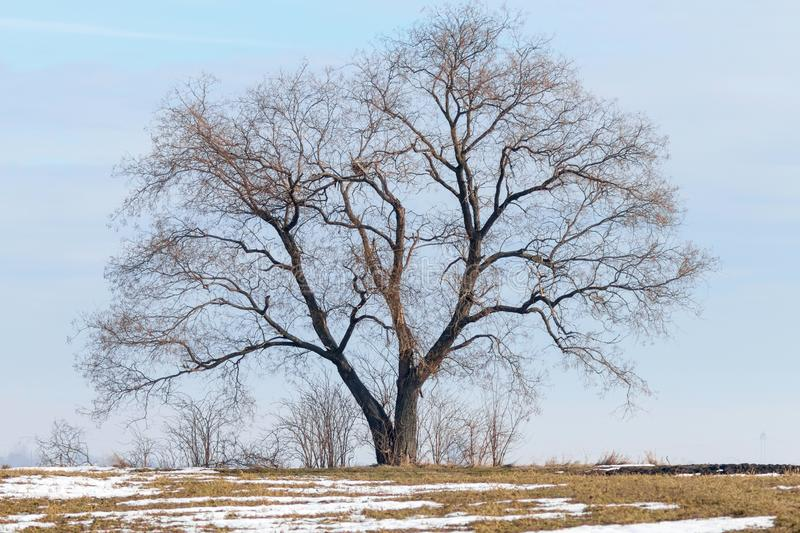 Tree standing on a field with melting snow Spring landscape. Nature royalty free stock photos