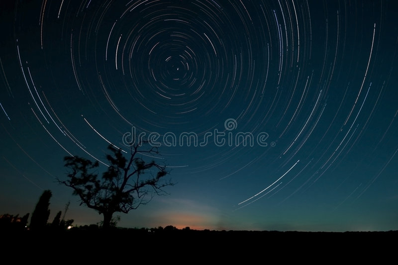 Tree and star trails royalty free stock image