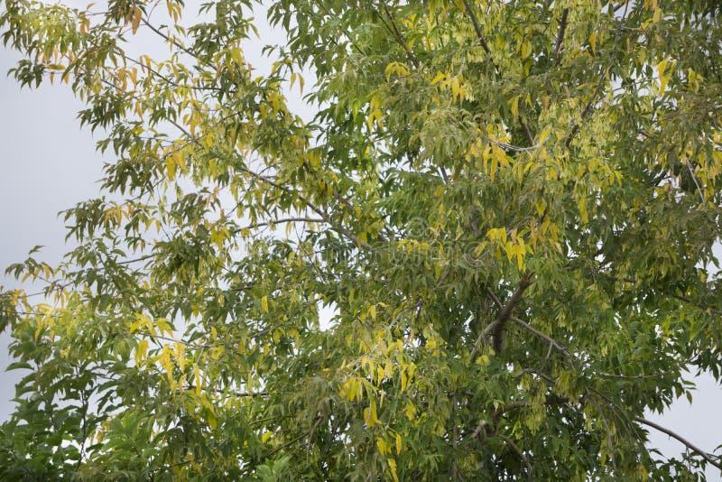 A tree during start of autumn stock photos