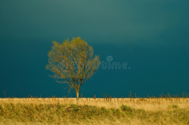 Download Tree before the Storm stock photo. Image of lonely, landscape - 24881000