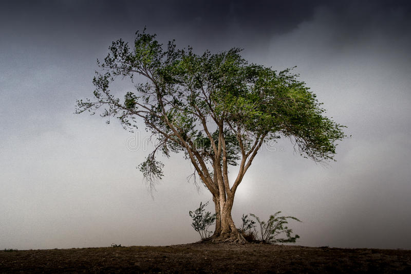 Tree before the storm stock images