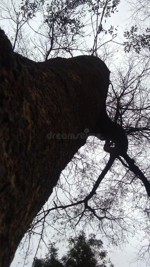 TREE STORY IN SAD royalty free stock image