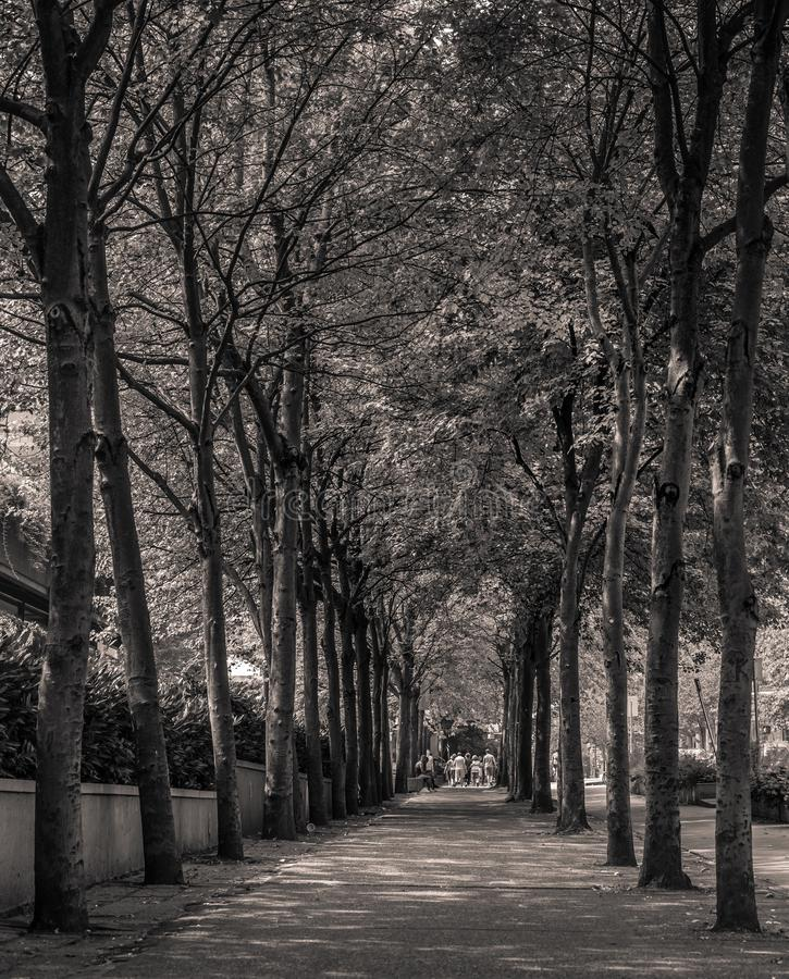 Tree street royalty free stock photography