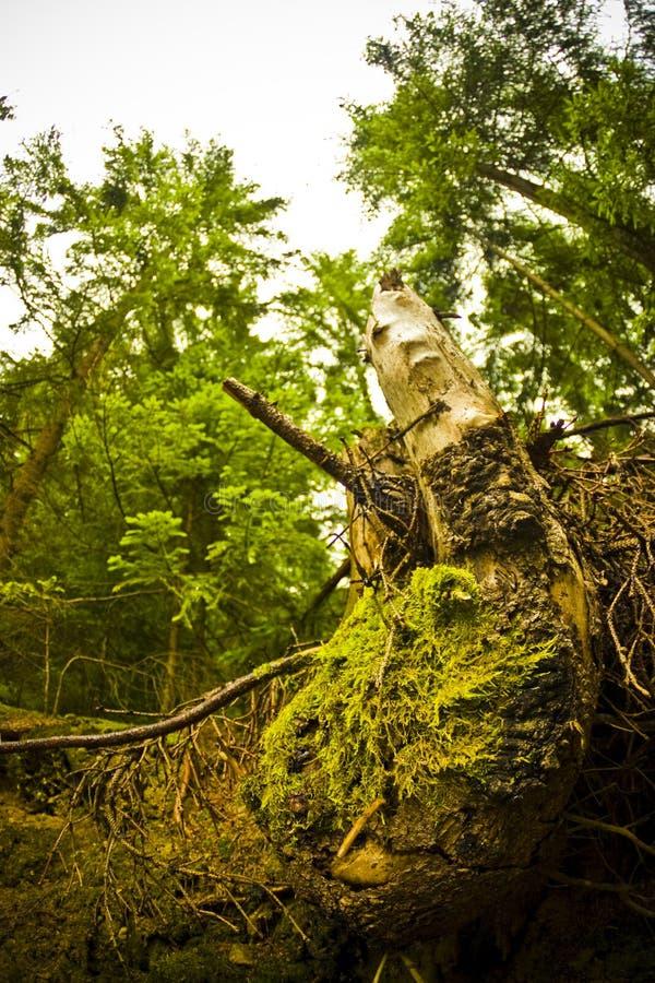Download Tree stump stock image. Image of grass, yellow, tree, green - 5907849