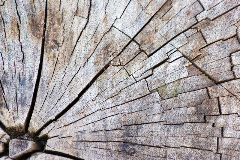 Tree stump. Abstract texture of tree stump, crack wood ancient royalty free stock photography