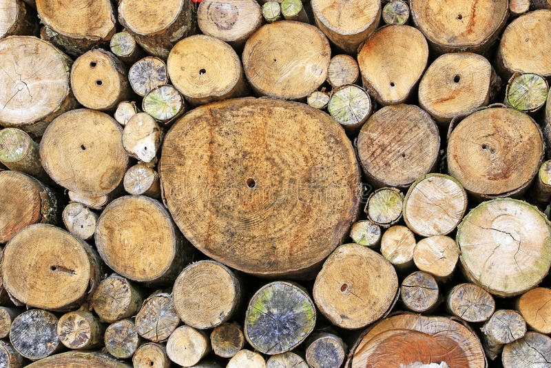 Tree stump background stock image