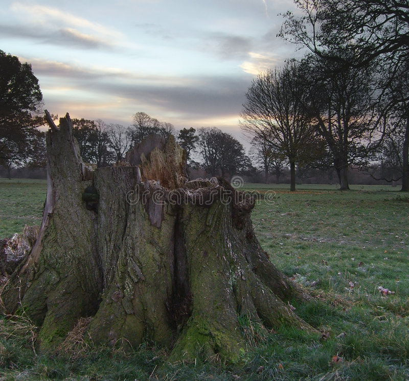 Tree Stump At Dawn royalty free stock images