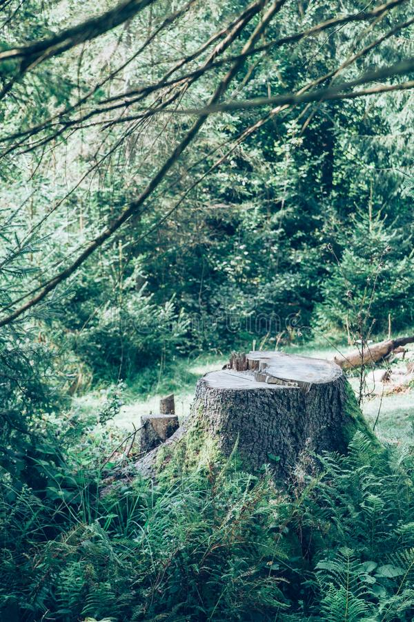Tree stump in the forest. stock images