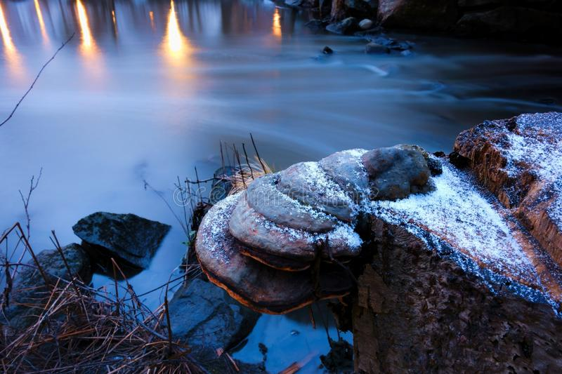 Tree stump with fungus and little snow by the small river in Helsinki, Finland stock photography