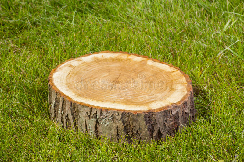 Tree stump on the grass. Tree stump on the green grass royalty free stock image