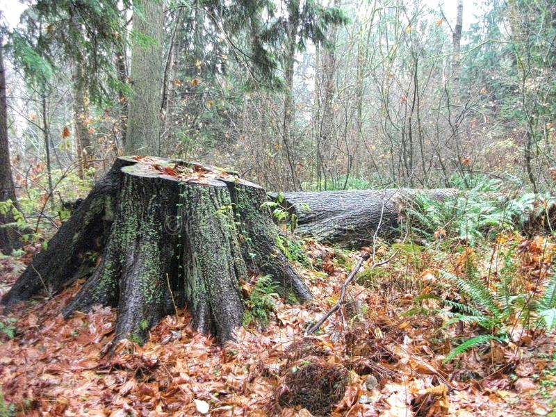 A tree stump in the middel of the park. A tree stump in the middel of a park royalty free stock image
