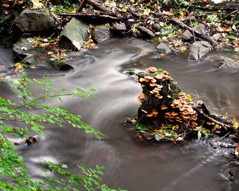 Tree stump with mushrooms and moss in the water. Herbststimmung - Ein Baumstumpf, der dicht mit Pilzen und Moos bewachsen ist, steht inmitten eines kleinen royalty free stock images