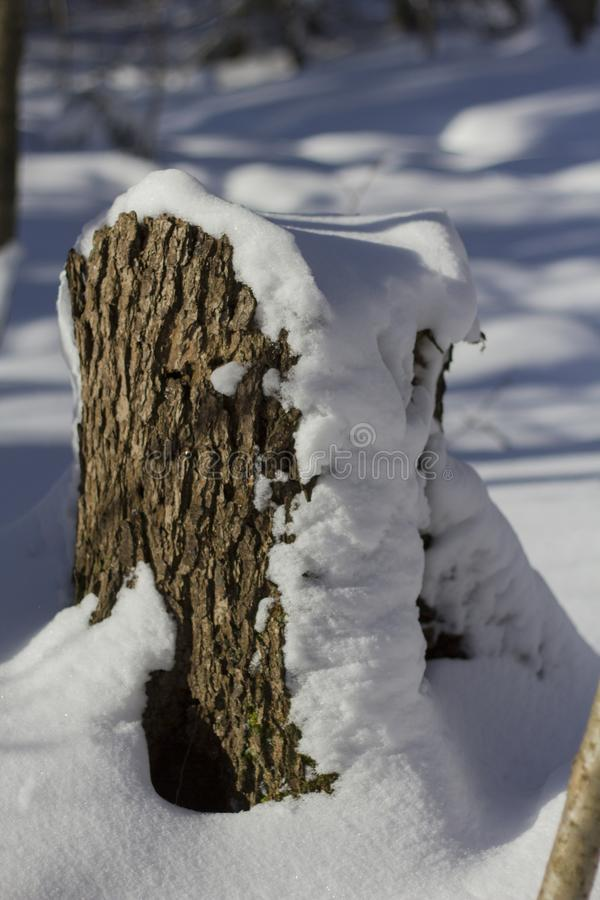 A small stump with a snow cap in the forest royalty free stock photo
