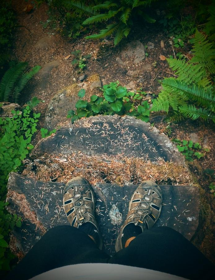 Tree stump and POV stock images