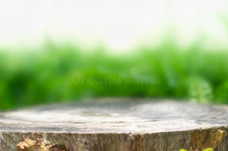 Tree stump for product display montages. Natural background. stock photos