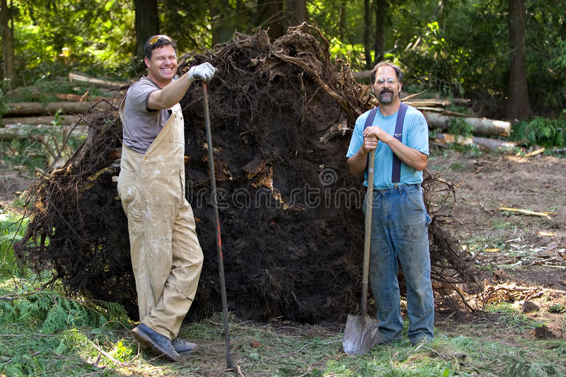 Tree Stump Removal. Smiling men removing a large tree stump stock photos