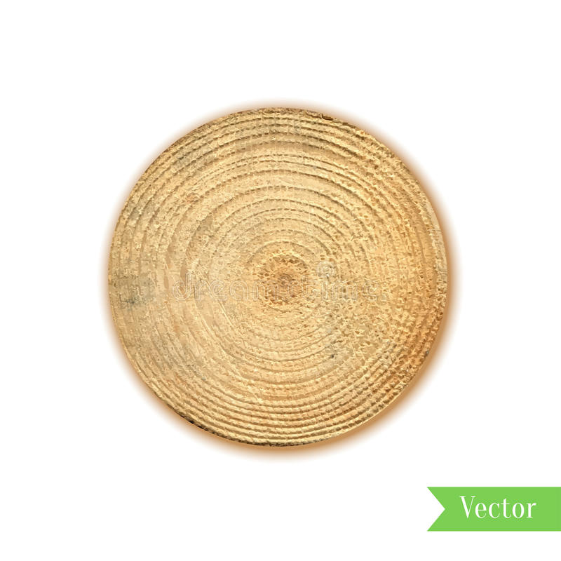 Tree stump, round cut with annual rings vector. Wooden cross section. Vector illustration. Realistic isolated circle tree can be stock illustration