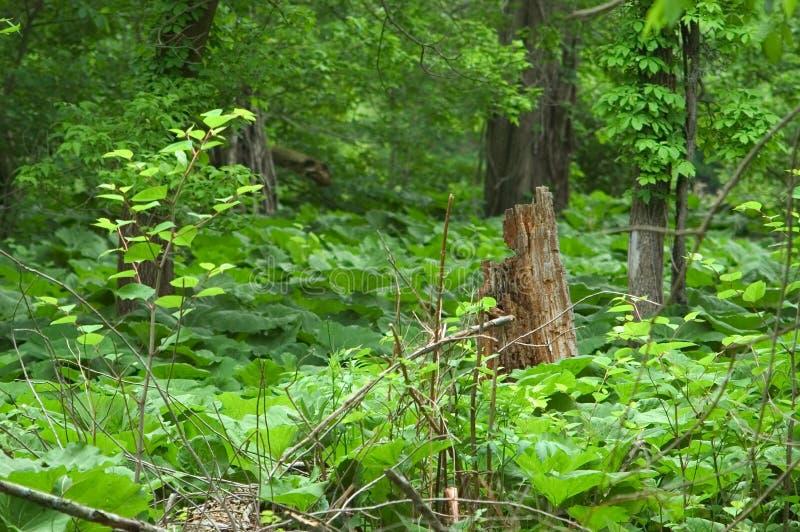 Tree stump surrounded be vegetation stock photography