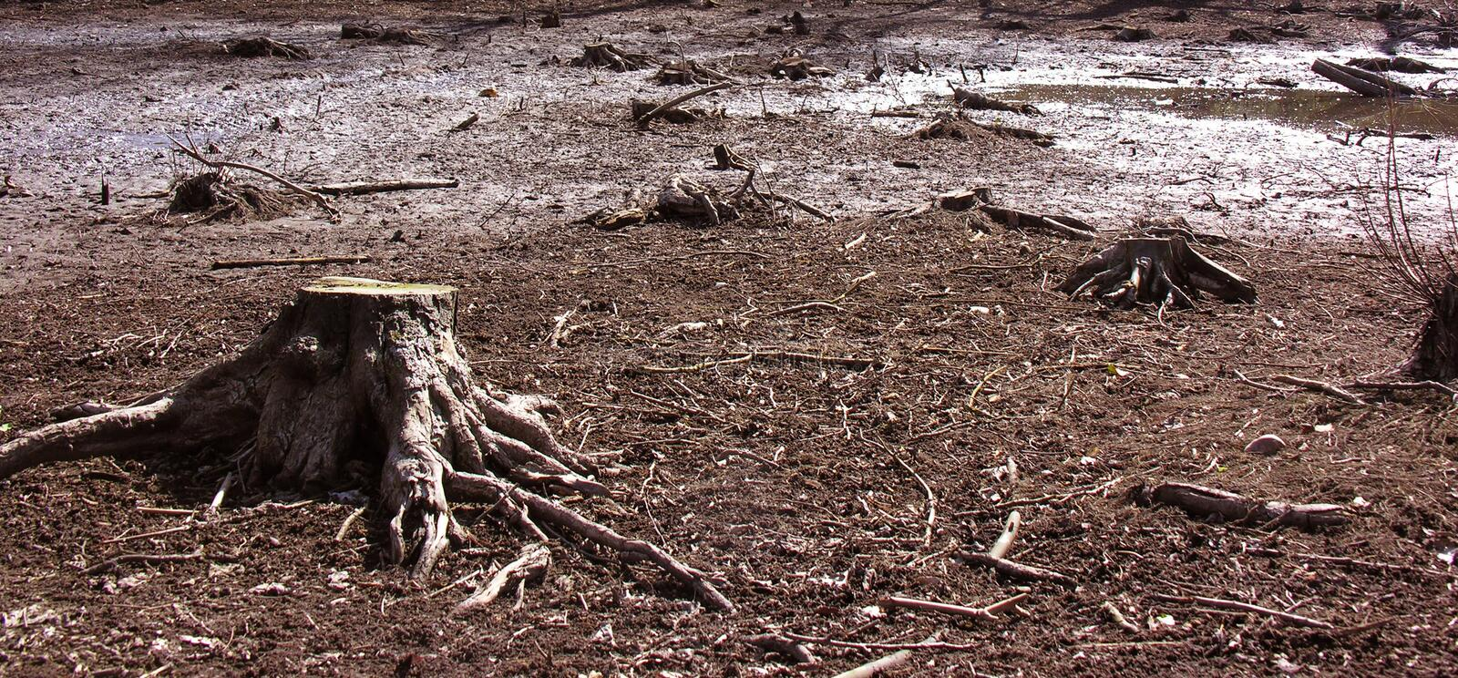 Tree stump in a swamp stock image