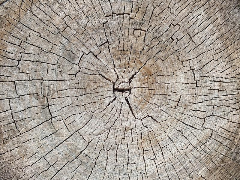 Tree stump texture background. Wooden background. Cross section of tree stock image
