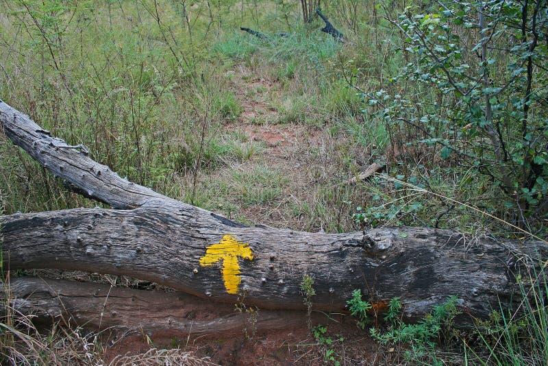 TREE STUMP WITH YELLOW INDICATOR ARROW stock image